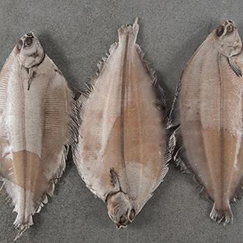 fish-350