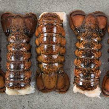 seatrek-lobster-tails